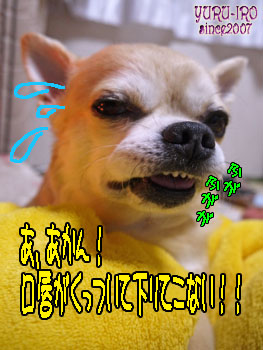 yuruiro20140204_k004