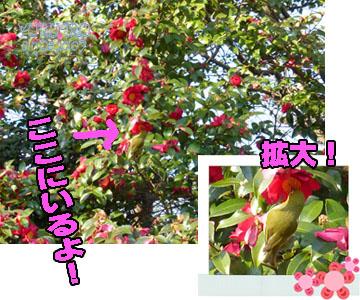 yuruiro20150217_k002