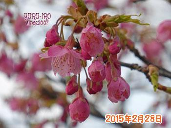 yuruiro20150302_k003