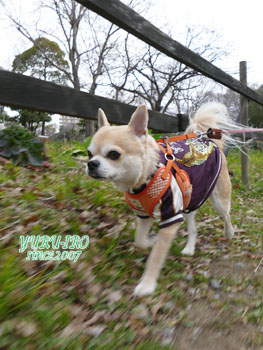 yuruiro20150308_k001
