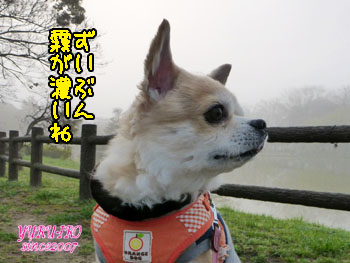 yuruiro20150317_k001