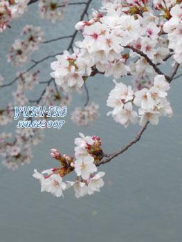 yuruiro20150415_k001