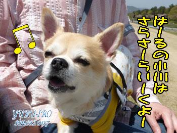 yuruiro20150422_k005