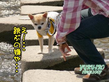 yuruiro20150420_k001