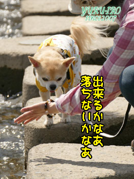 yuruiro20150420_k002