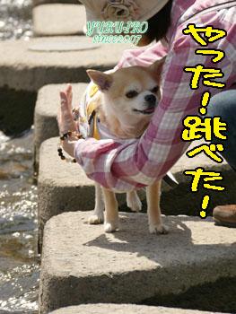 yuruiro20150420_k003