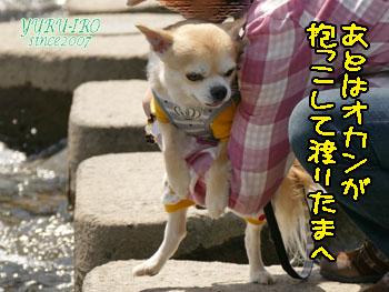 yuruiro20150420_k004