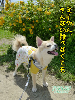 yuruiro_k_20150420_kk07