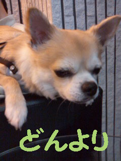 yuruiro20150425_k001