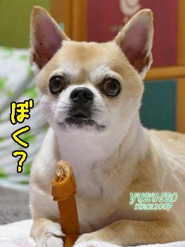 yuruiro20150502_k002