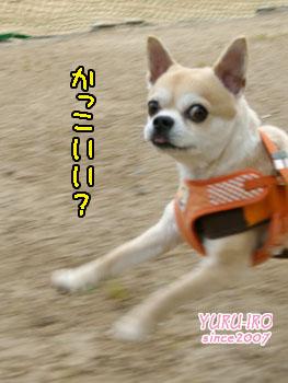 yuruiro20150505_k003