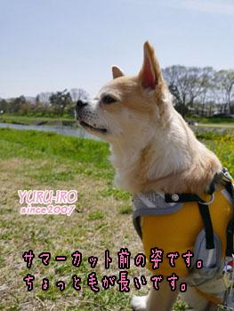 yuruiro20150505_k005