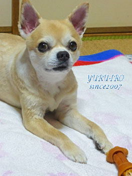 yuruiro2015018_k004