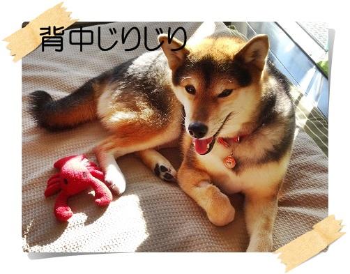 komaro20141229_3.jpg