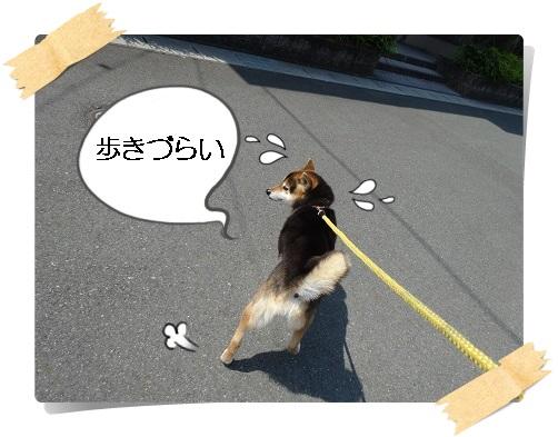 komaro20150429_3.jpg