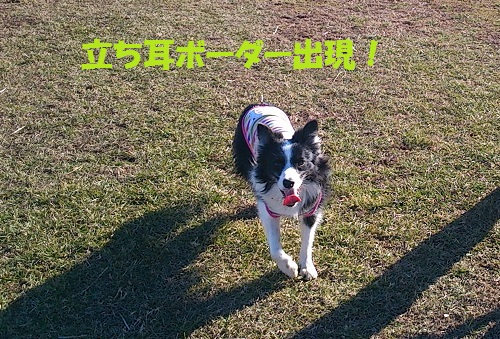 DSC_3649.jpg