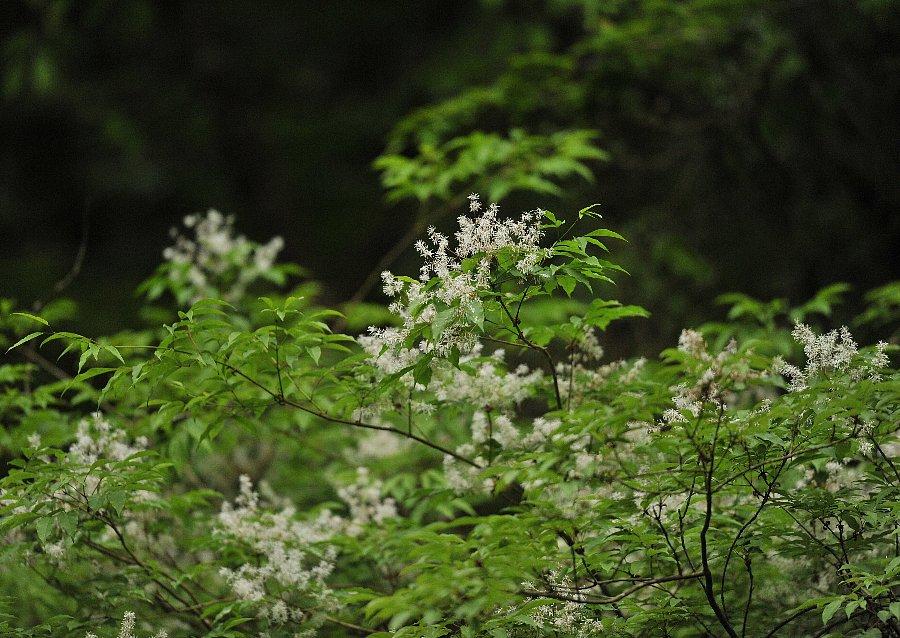 2015-05-13-hagakure-005.jpg