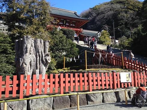 鶴岡八幡大銀杏2