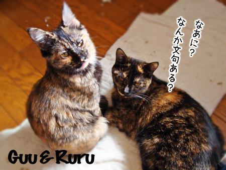 ぐー&るる2014.12.28