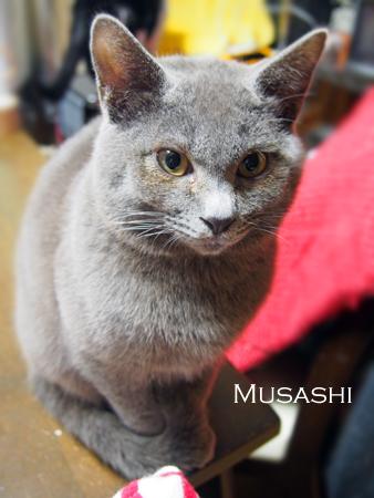 ムサシ2015.2.9②