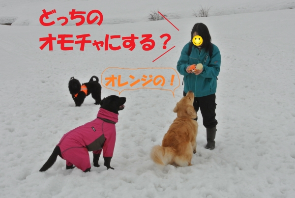 DSC_6390.jpg