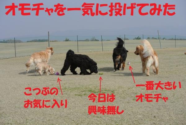 DSC_7011.jpg