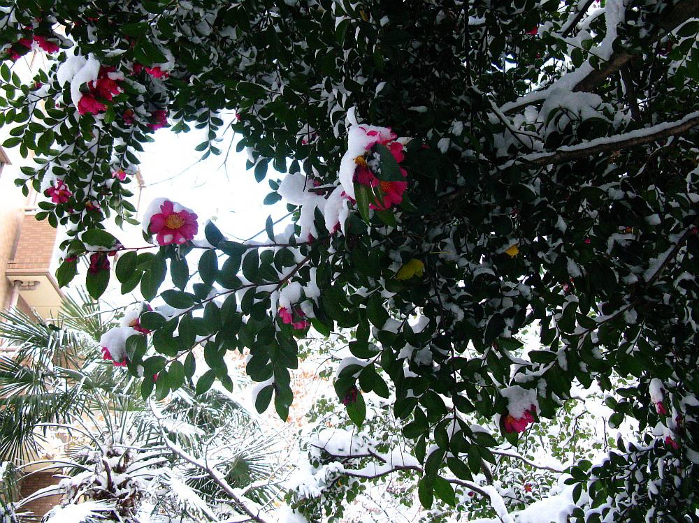 2014_12_18名古屋:大雪 (6)