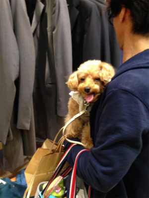 トイプードル こゆき 軽井沢犬連れ