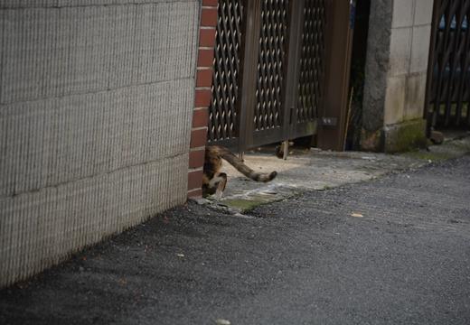 下総中山201507 (83)_R