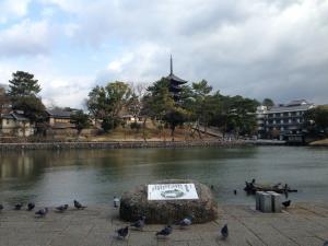 sarusawa0119_convert_20150119111901.jpg