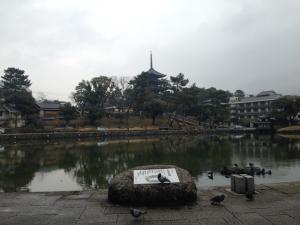 sarusawa0223_convert_20150223130440.jpg