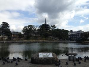 sarusawa0311_convert_20150311115446.jpg