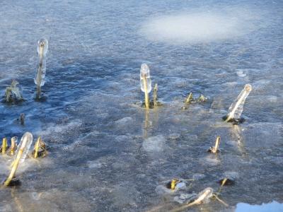諏訪湖 氷