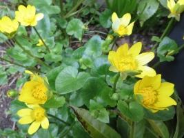 路傍の黄花