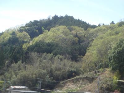 萌葱色の山々
