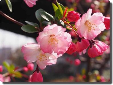 mini_21_kaidou_P3302571.jpg