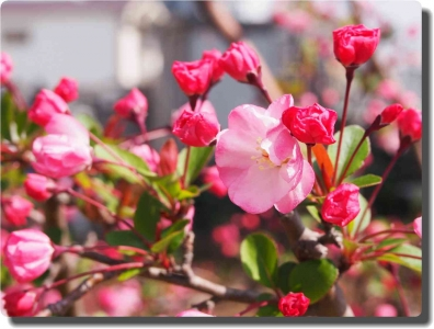 mini_22_hanakaidou_P3302566.jpg