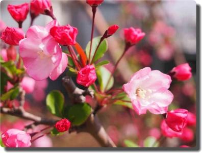 mini_23_hanakaidou_P3302567.jpg