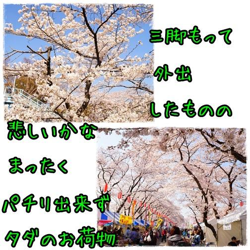 桜祭り2015