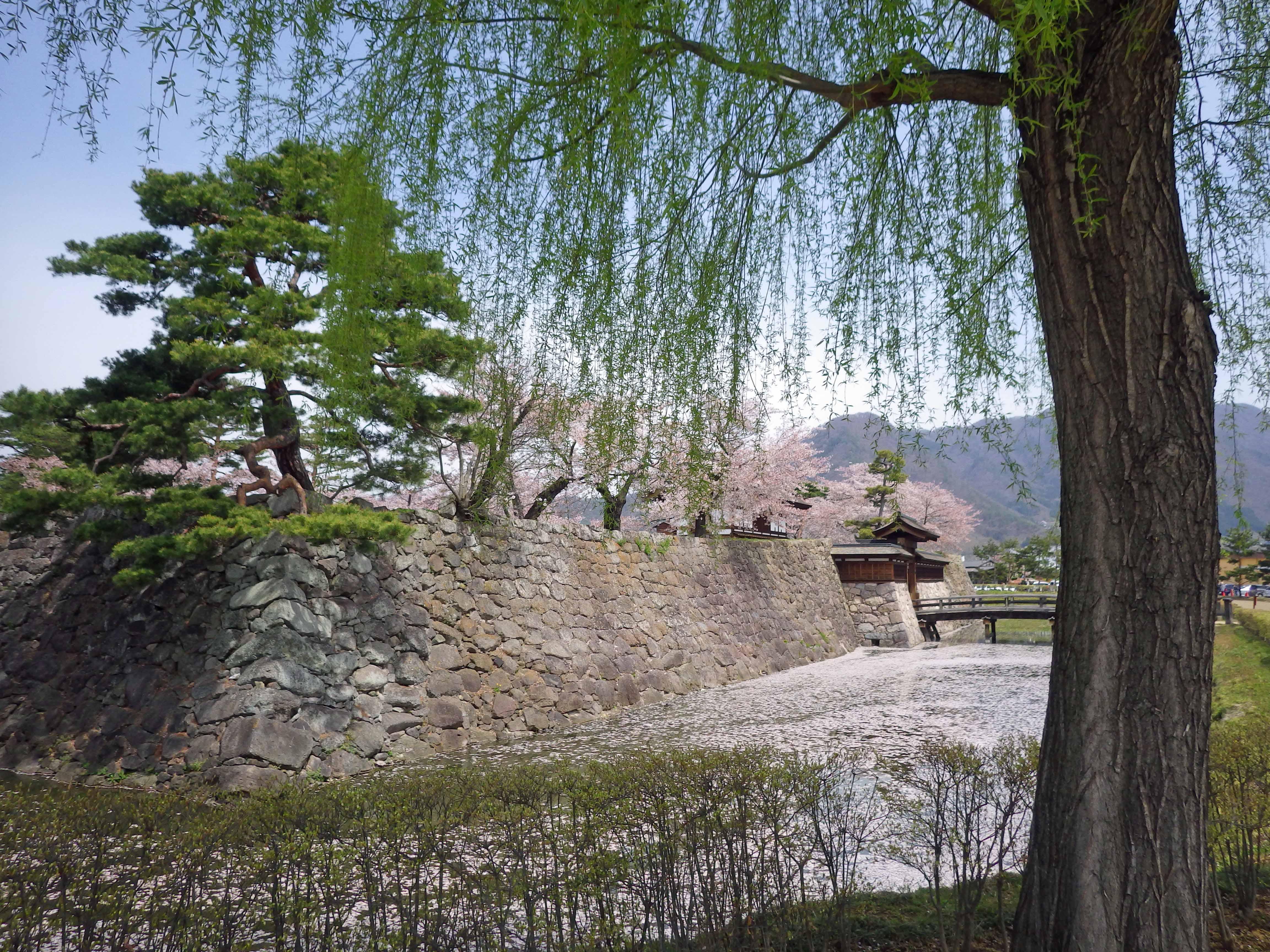 桜散る松代城