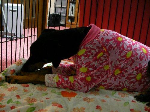 201501122012ピンク花柄長袖③