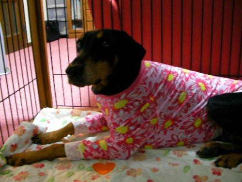 201501122012ピンク花柄長袖⑤