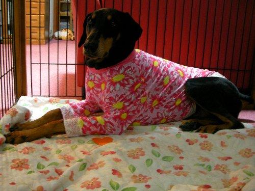201501122012ピンク花柄長袖①
