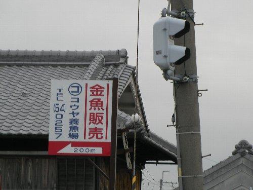 201501141336郡山金魚