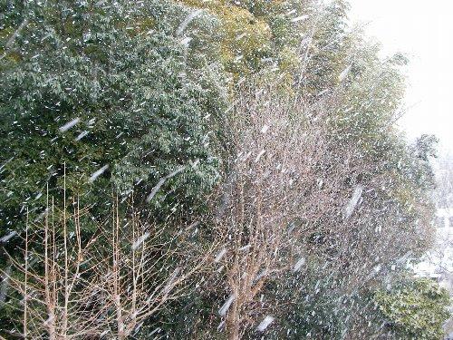 201502131527雪⑤