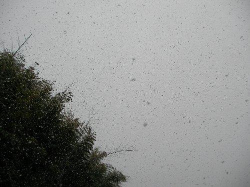 201502131527雪⑥