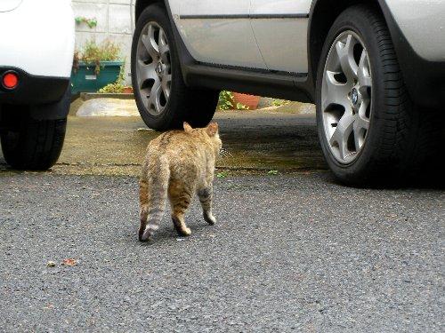 201505161025野良猫さん①