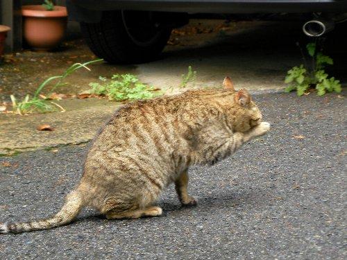 201505161025野良猫さん②