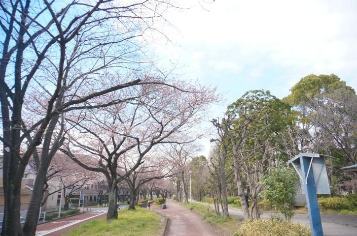 20150328Mizumoto1.jpg