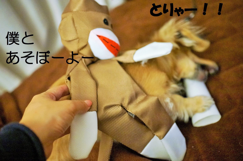 ShinDaisuki5.jpg